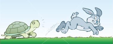 turtle chasing